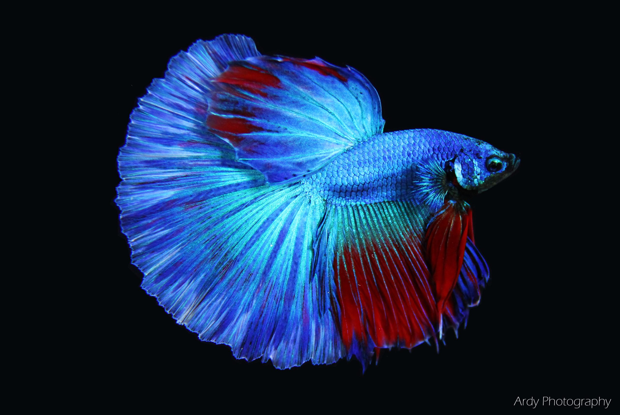 Betta Nutrition and more